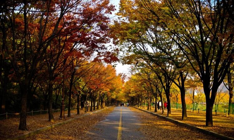 autumn-royalty-free-artist-cloud.jpg